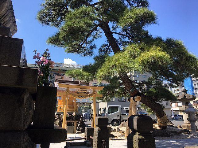 恵光メモリアル新宿浄苑 苑内にある立派な松