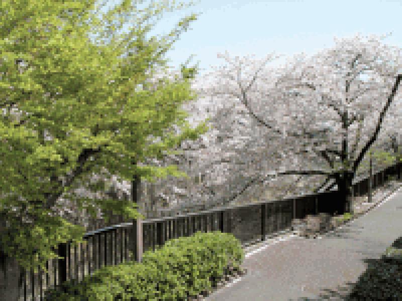 サニープレイス福壽園(福寿園) 桜が咲く遊歩道