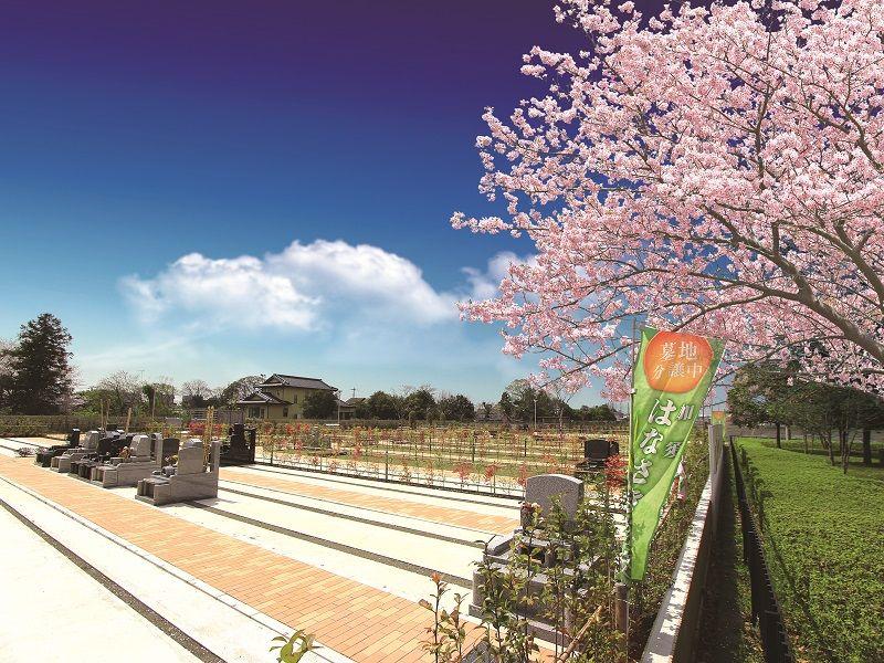春に桜が色づく加須はなさき浄苑